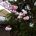 Uenopark13.jpg