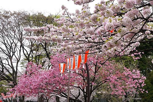 Uenopark17.jpg