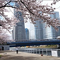 Yokohama09.jpg