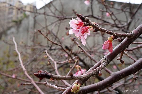 sakura & glass11.jpg