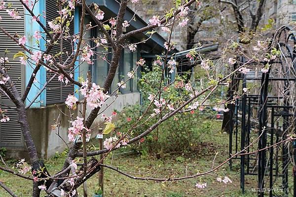 sakura & glass12.jpg