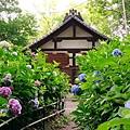 和服&紫陽花1.jpg