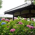 和服&紫陽花19.jpg