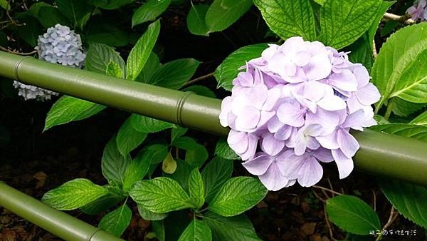 和服&紫陽花27.jpg