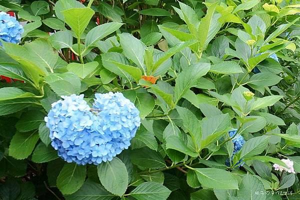 和服&紫陽花37.jpg