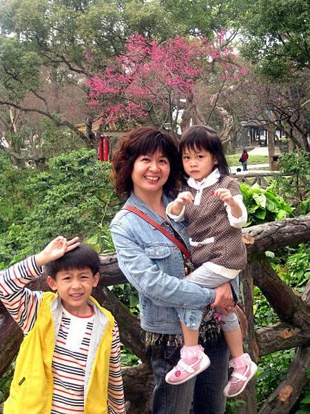 中正公園的櫻花