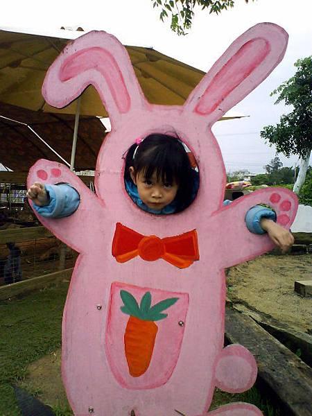 可愛的小兔子