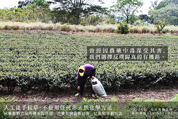 立品有機茶園089-551607 (5)
