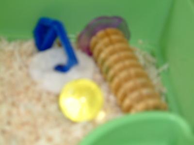 老鼠的玩具.jpg