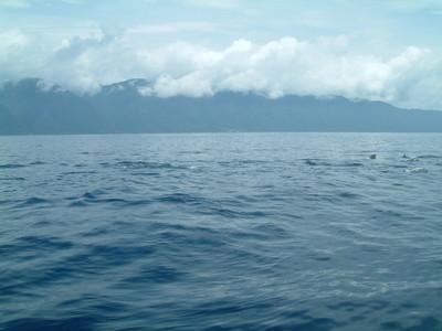 賞鯨豚2.jpg