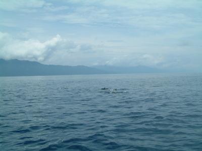 賞鯨豚3.jpg