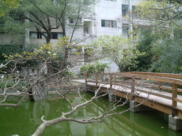 小橋傍斜枝