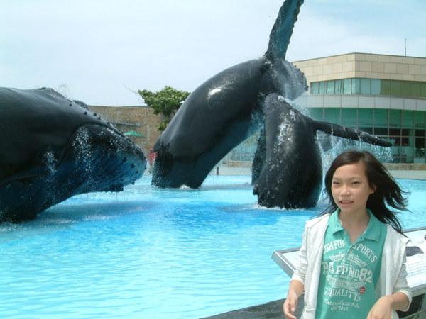 海豚與芹格格