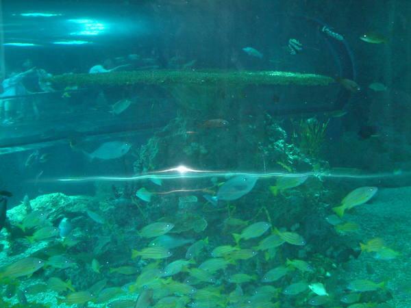 海博館的魚群