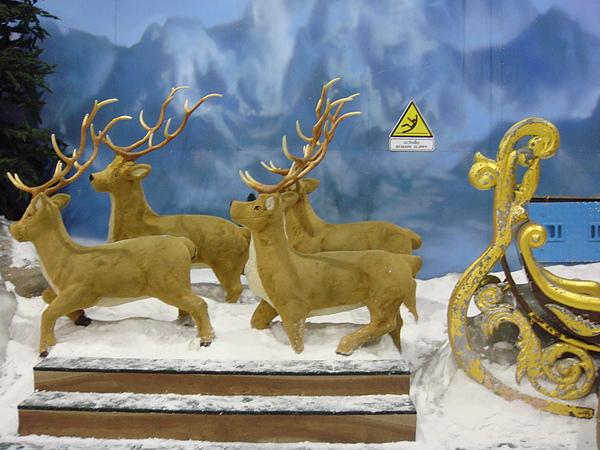 雪屋中的糜鹿.JPG