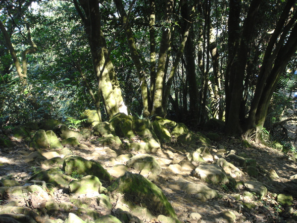 石門山登山步道-3.jpg