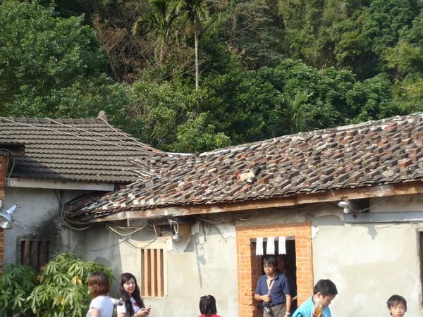 老頭擺飛上屋頂的土雞.jpg