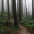 迷霧森林-2.jpg