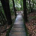 木棧階梯.jpg