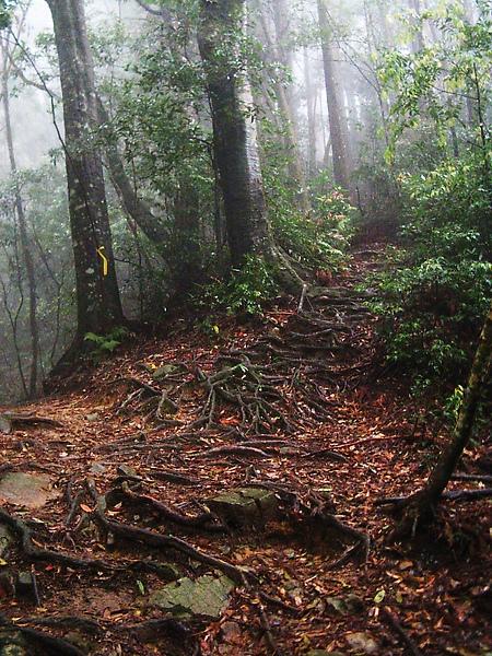 加里山步道-2.jpg