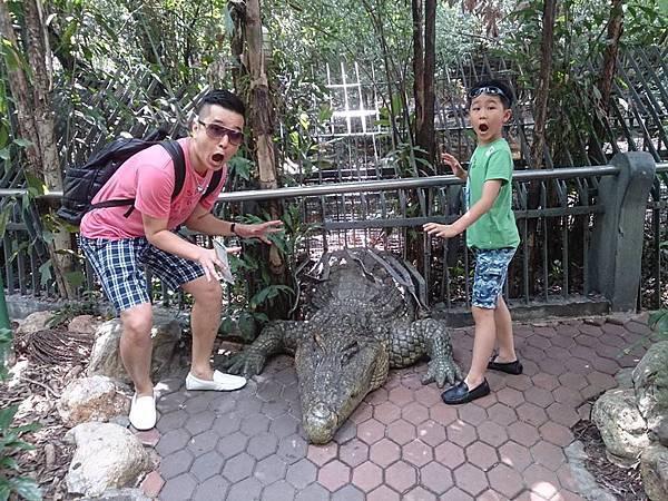 路邊假鱷魚