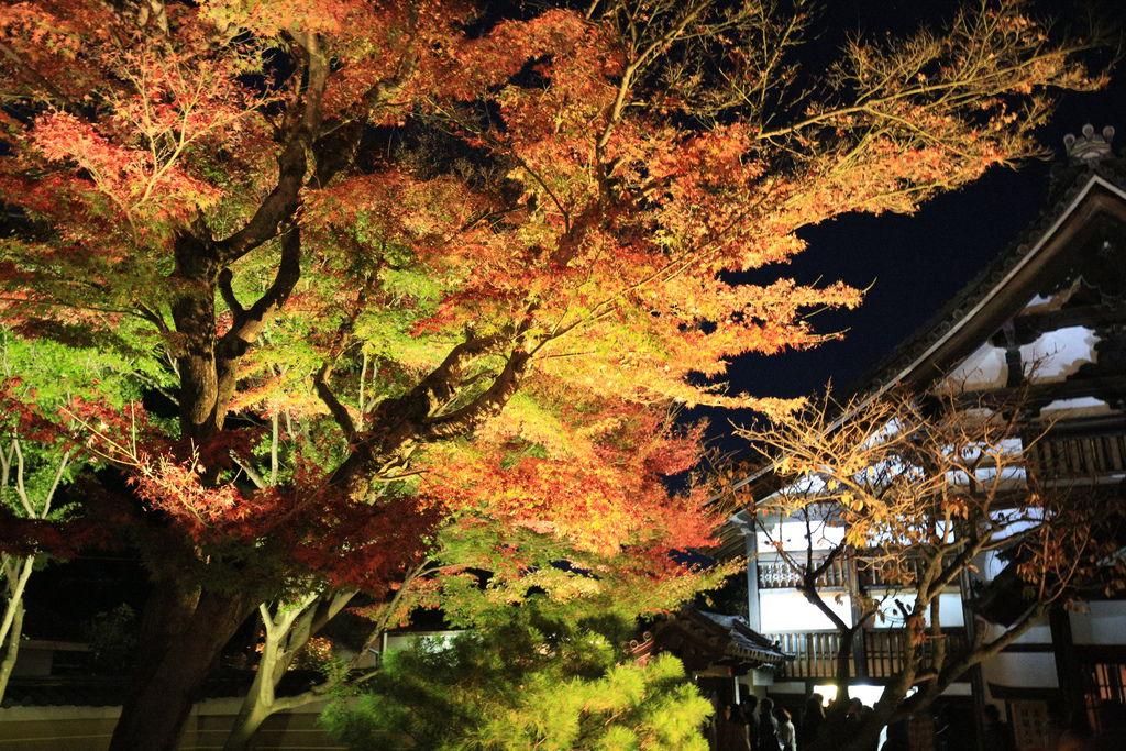 京都高台寺 027