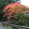 這棵樹很漂亮阿