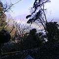 過年有彩虹