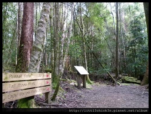 20111223_080210_0033_TasmaniaMountFieldNationalPark.JPG