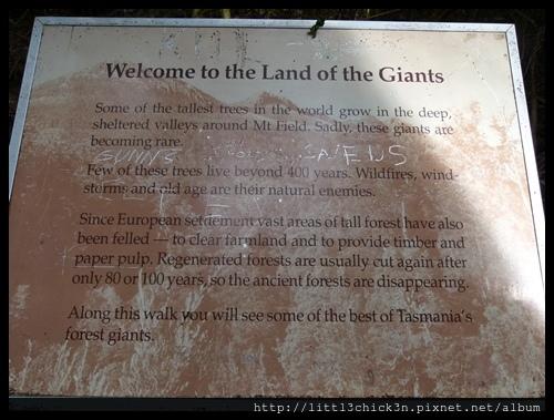 20111223_080224_0034_TasmaniaMountFieldNationalPark.JPG