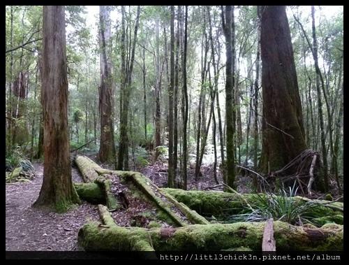 20111223_080525_0036_TasmaniaMountFieldNationalPark.JPG
