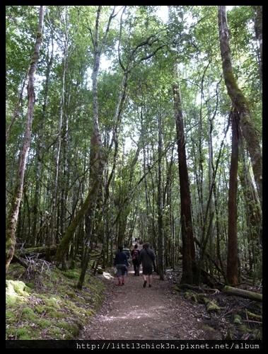 20111223_082035_0038_TasmaniaMountFieldNationalPark.JPG