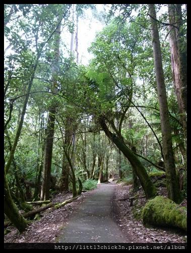 20111223_084814_0065_TasmaniaMountFieldNationalPark.JPG