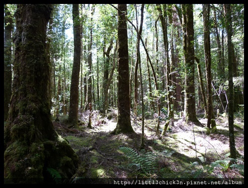 20111223_143735_0119_TasmaniaFranklinRiver.JPG