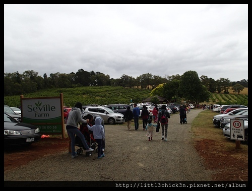 20151212_102918_SevilleFarmCherryPicking.JPG