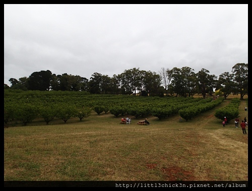 20151212_103623_SevilleFarmCherryPicking.JPG