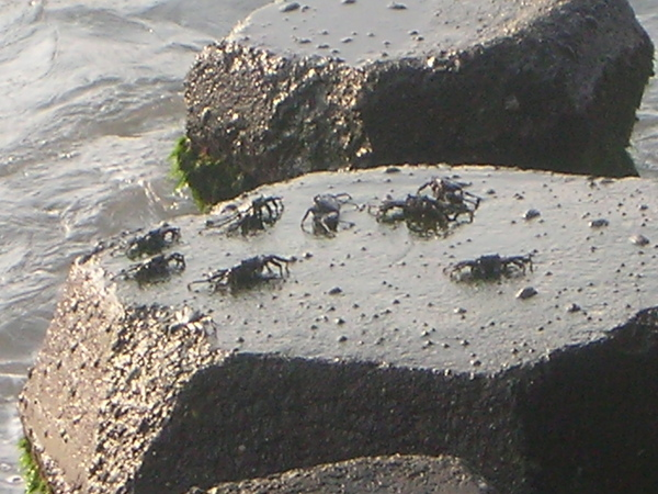 是遠處的螃蟹