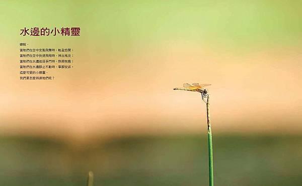 啊蜻蜓-final-網路用_頁面_33.jpg