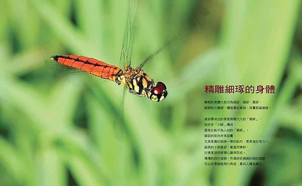 啊蜻蜓-final-網路用_頁面_08.jpg