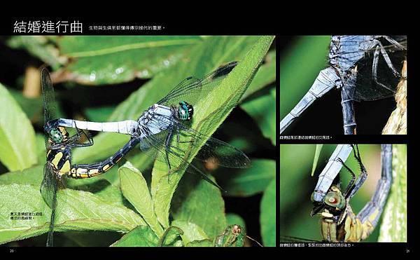 啊蜻蜓-final-網路用_頁面_13.jpg