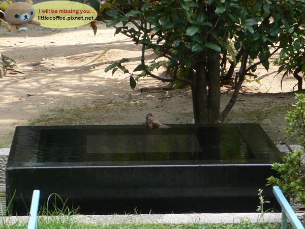 圖書館外洗澡的小鳥