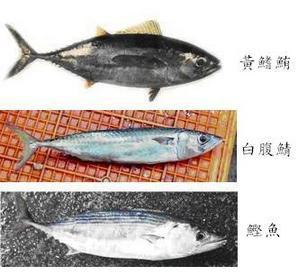組織魚種.jpg