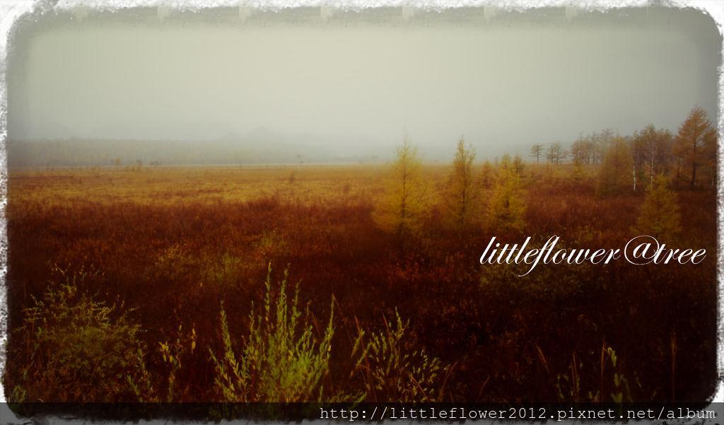 IMGP8739_Fotor