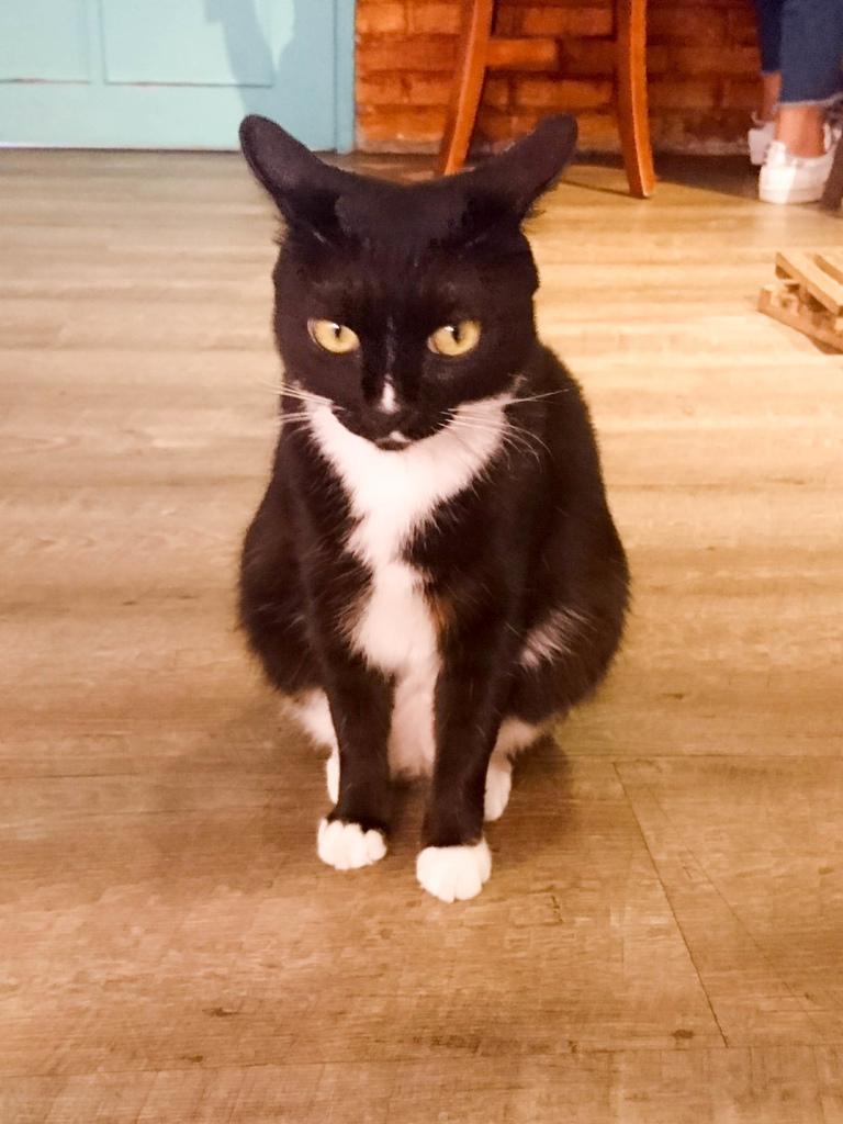 貓咪先生的朋友_170808_0002.jpg