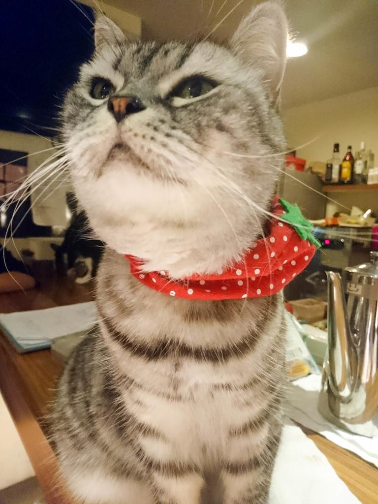 貓咪先生的朋友_170808_0006.jpg