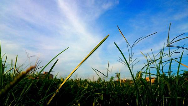 草地與天空
