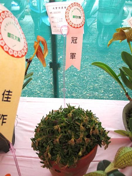 2011國光秋蘭展