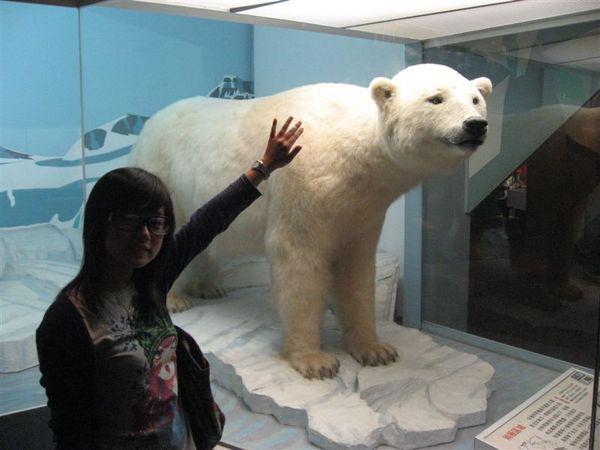 好可愛的北極熊