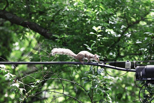 20110530 松鼠爬爬.jpg