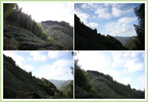 忘憂森林探路 10.jpg